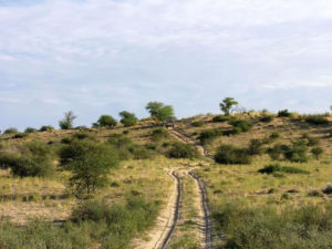 Kgalagadi Transfrontier Park - Twee Rivieren | Magic of the Kalahari Tours | Experience the African Wild