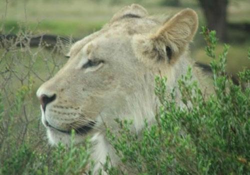SA Tour 1 - 14 Days - Kalahari - Port Elizabeth National Parks Tour | South African Tours | Magic of the Kalahari Tours | Experience the African Wild